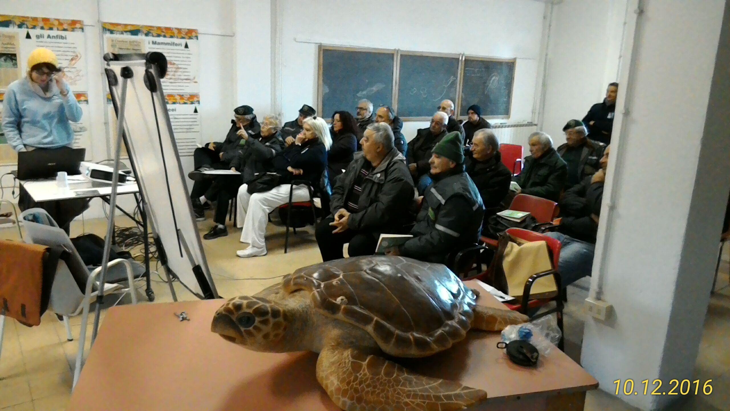 primo soccorso tartarughe marine guardie ecologiche
