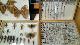 Museo Entomologico San Giovanni 11/03/2017